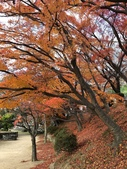2019/12/8~13和歌山高野山丶熊野古道、姫路城:姫路城楓葉