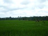 Beauty in Bali 第一本:DSCF7916.JPG