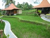 Beauty in Bali 第一本:DSCF7912.JPG
