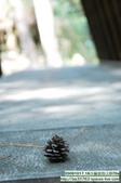 20091017.18谷關渡假ㄑ-景物系D70s:20091017.18谷關渡假ㄑ-D70s (50)_nEO_IMG.jpg