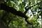 20140412石梯嶺步道+擎天崗環道+魚路古道-台北D7100:20140629三角山長坑山雙峰山員屯山D710058.jpg