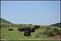 20140412石梯嶺步道+擎天崗環道+魚路古道-台北D7100:20140629三角山長坑山雙峰山員屯山D710050.jpg