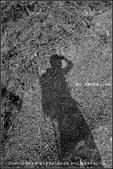 20140412石梯嶺步道+擎天崗環道+魚路古道-台北D7100:nEO_IMG_20140412石梯嶺步道+擎天崗環道+魚路古道-台北D7100 (19)09.jpg