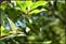 20140412石梯嶺步道+擎天崗環道+魚路古道-台北D7100:20140629三角山長坑山雙峰山員屯山D710057.jpg