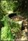 20140412石梯嶺步道+擎天崗環道+魚路古道-台北D7100:20140629三角山長坑山雙峰山員屯山D710060.jpg