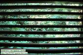 20091017.18谷關渡假ㄑ-景物系D70s:20091017.18谷關渡假ㄑ-D70s (43)_nEO_IMG.jpg