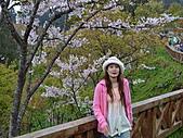 阿里山:DSC_0033.JPG