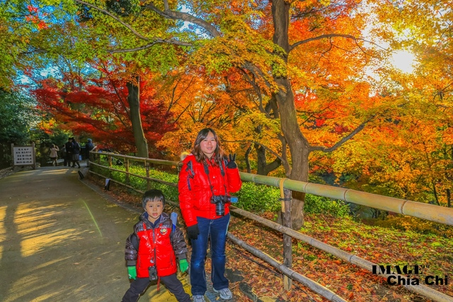 5N1C9316.jpg - 北野天滿宮,楓紅銀杏與藍天交織成的美景