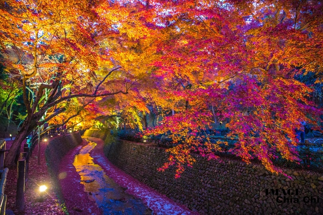 5N1C9541.jpg - 北野天滿宮,楓紅銀杏與藍天交織成的美景
