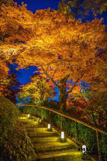 5N1C9632.jpg - 北野天滿宮,楓紅銀杏與藍天交織成的美景