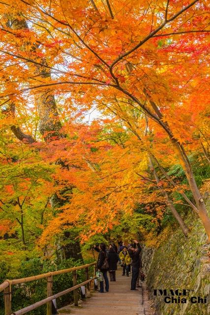5N1C9403.jpg - 北野天滿宮,楓紅銀杏與藍天交織成的美景