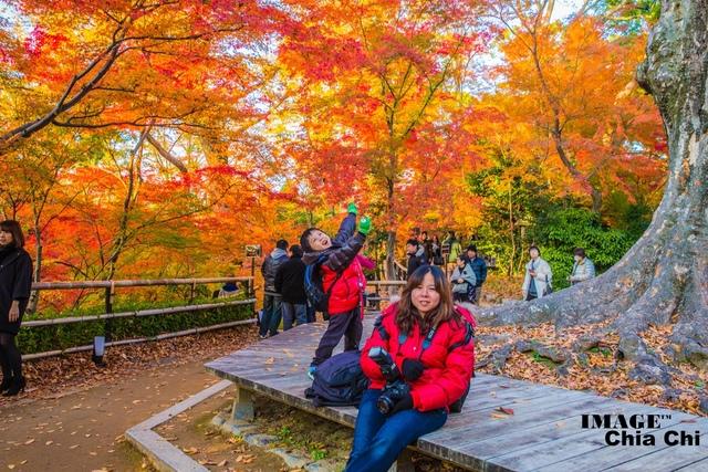 5N1C9394.jpg - 北野天滿宮,楓紅銀杏與藍天交織成的美景