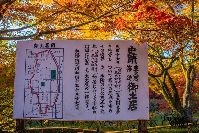 5N1C9240.jpg - 北野天滿宮,楓紅銀杏與藍天交織成的美景