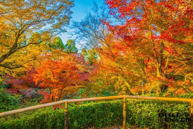5N1C9257.jpg - 北野天滿宮,楓紅銀杏與藍天交織成的美景
