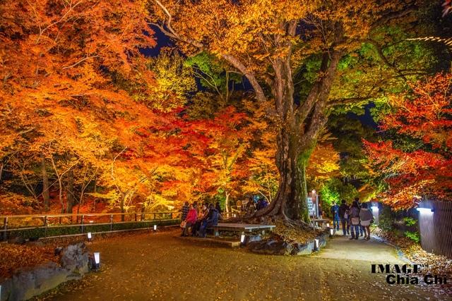 5N1C9656.jpg - 北野天滿宮,楓紅銀杏與藍天交織成的美景