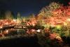 5N1C5568.jpg - 京都賞楓聖地,永觀堂的楓紅滿天與夜楓