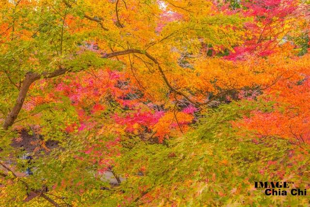 5N1C9365.jpg - 北野天滿宮,楓紅銀杏與藍天交織成的美景