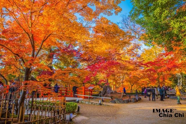 5N1C9326.jpg - 北野天滿宮,楓紅銀杏與藍天交織成的美景