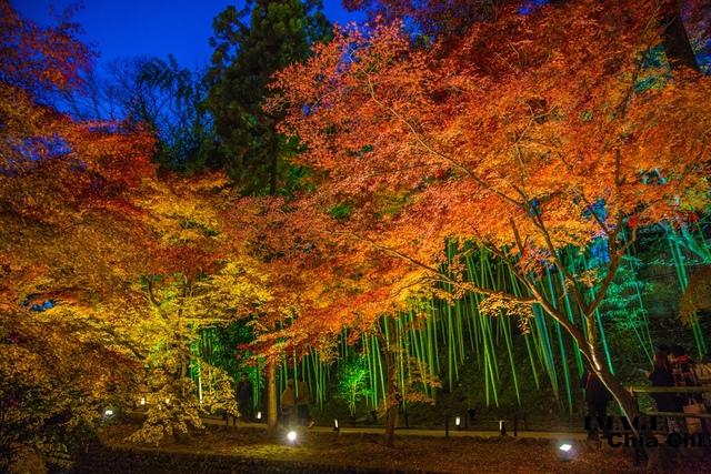 5N1C9593.jpg - 北野天滿宮,楓紅銀杏與藍天交織成的美景