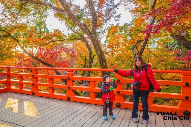 5N1C9362.jpg - 北野天滿宮,楓紅銀杏與藍天交織成的美景