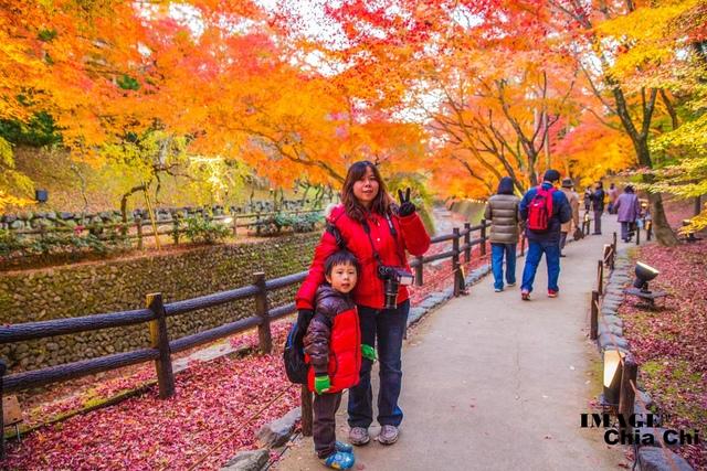 5N1C9515.jpg - 北野天滿宮,楓紅銀杏與藍天交織成的美景