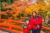 5N1C9472.jpg - 北野天滿宮,楓紅銀杏與藍天交織成的美景