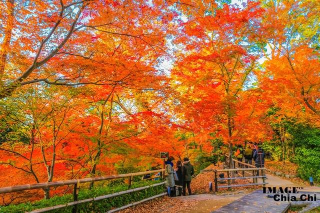 5N1C9396.jpg - 北野天滿宮,楓紅銀杏與藍天交織成的美景