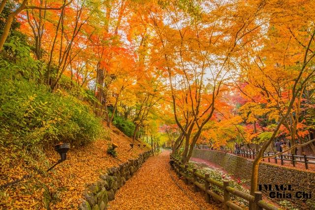 5N1C9422.jpg - 北野天滿宮,楓紅銀杏與藍天交織成的美景