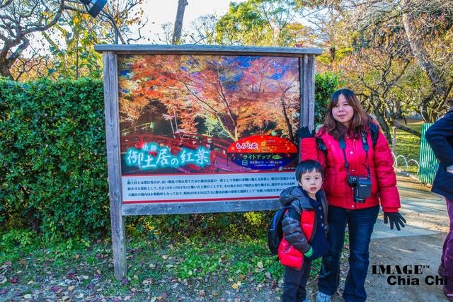5N1C9214.jpg - 北野天滿宮,楓紅銀杏與藍天交織成的美景