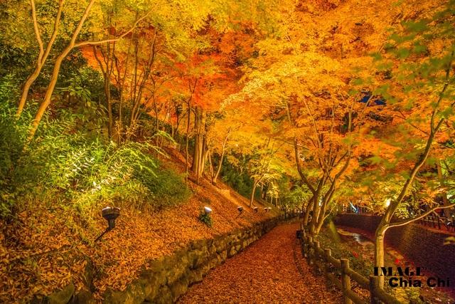 5N1C9687.jpg - 北野天滿宮,楓紅銀杏與藍天交織成的美景