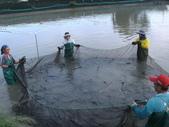 食譜:鰻魚價格飆漲.jpg