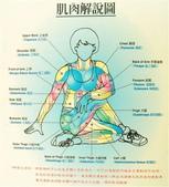 健康資訊:肌肉解說圖
