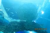 2012*10*16/17--秀傳墾丁之旅^^:12.10.16國立海洋生物博物館 (30).