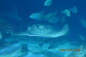 2012*10*16/17--秀傳墾丁之旅^^:12.10.16國立海洋生物博物館 (13).