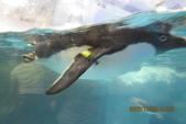 2012*10*16/17--秀傳墾丁之旅^^:12.10.16國立海洋生物博物館 (16).