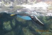 2012*10*16/17--秀傳墾丁之旅^^:12.10.16國立海洋生物博物館 (22).