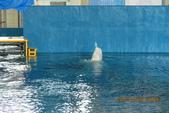 2012*10*16/17--秀傳墾丁之旅^^:12.10.16國立海洋生物博物館 (27).