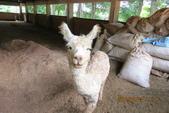 2013*06*23--天馬牧場&高美溼地^&^:13.06.23天馬牧場 (18).JPG