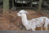 2013*06*23--天馬牧場&高美溼地^&^:13.06.23天馬牧場 (27).JPG