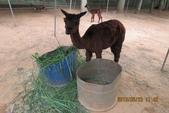 2013*06*23--天馬牧場&高美溼地^&^:13.06.23天馬牧場 (31).JPG