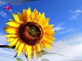 花卉:PhotoCap_003.jpg
