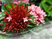 花卉:PhotoCap_005.jpg