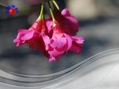 花卉:PhotoCap_004.jpg