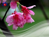 花卉:PhotoCap_002.jpg