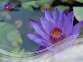 花卉:PhotoCap_001.jpg