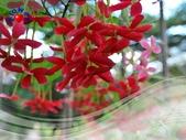 花卉:PhotoCap_010.jpg