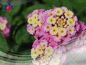 花卉:PhotoCap_006.jpg