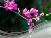 花卉:PhotoCap_009.jpg