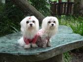 2006-04-23 東眼山森林遊樂區:P1000386