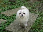 2006-04-23 東眼山森林遊樂區:P1000376